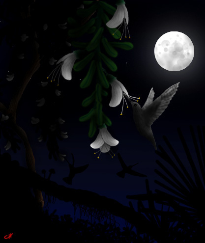 20080328002312-noche-1-.jpg
