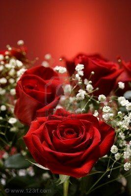 20101029204823-2190780-primer-plano-de-ramo-de-rosas-rojas-con-la-respiraci-n-del-beb-contra-el-fondo-rojo.jpg