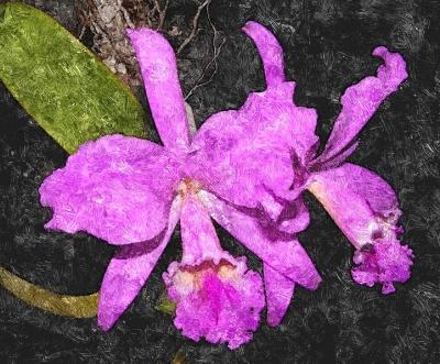 20110619050648-orquidea.jpg