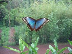 20090218234754-2095982438-64d9f7db5b-m-granja-de-mariposas.jpg